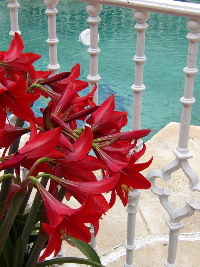 8 - Hotel Palacio Donana