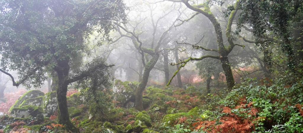 7337-1618420404_parque-natural-los-alcornocales.jpg.jpg