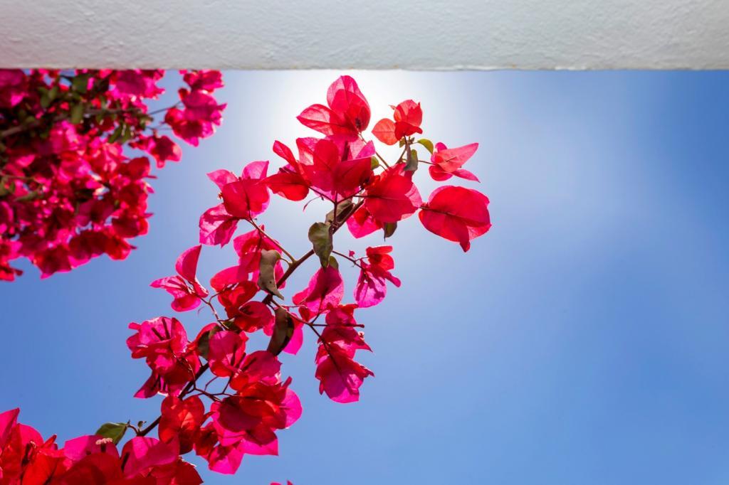 Hostal en Ibiza