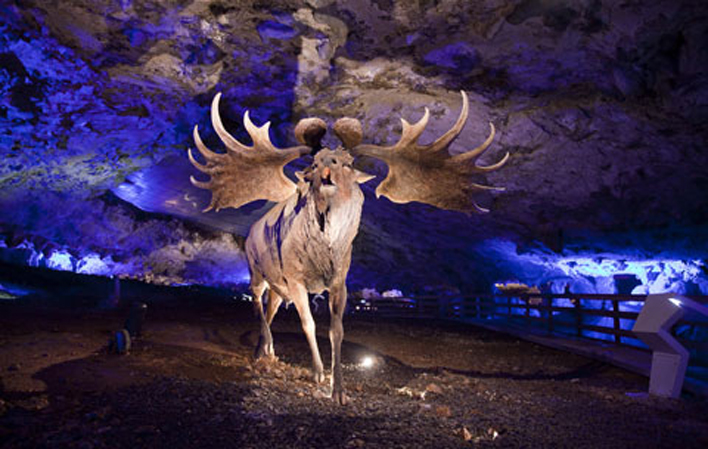 fauna glacial avin